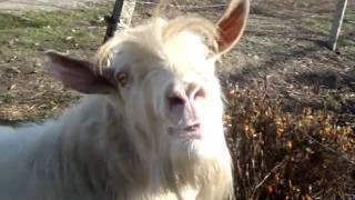 прикол!!!! козёл жжёт!!!!! смотреть всем!!!)))))))