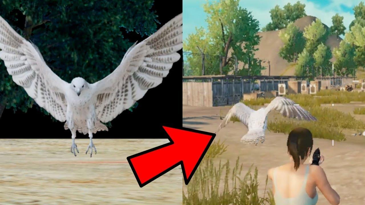 Para Que Sirve El águila En Pubg Mobile Nueva Mascota Actualización Beta 0 12 Youtube