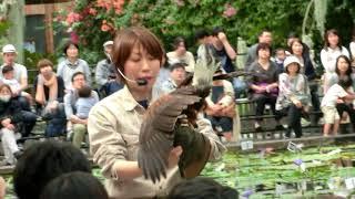 神戸どうぶつ王国 バードパフォーマンスショー 最初の1分ほどピンボケ...