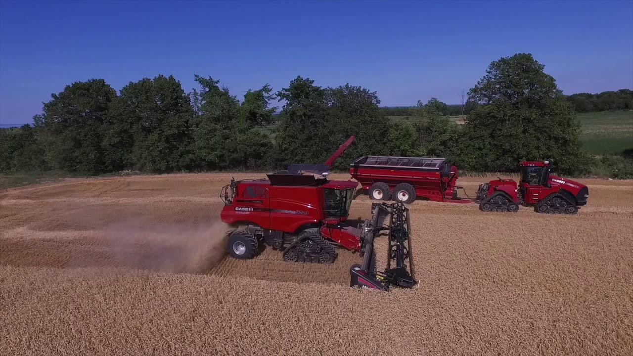 Case IH 9240 Combine on Tracks with Macdon FD75 45' Head Cutting Wheat Near  Blue Mountain, Ontario