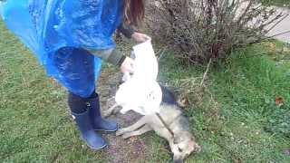 Таврида-Электрик-сбитая собака.