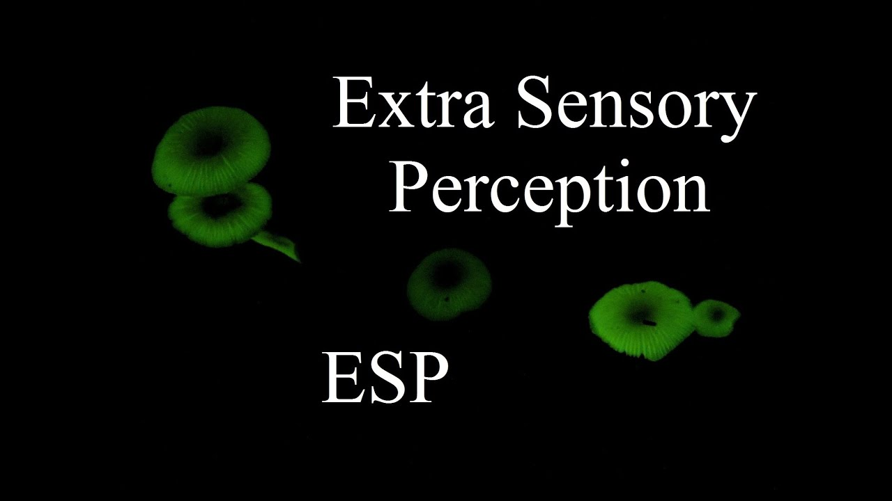 sensory perceptions Perception and the brain saw that your brain is capable of adjusting your body motions to changes in the environment that are detected through sensory perception.