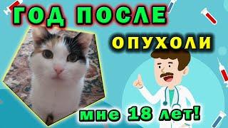 Год после карциномы ☝ Опухоль молочной железы😎 Старая кошка