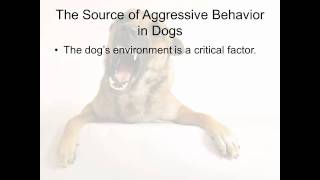 Best Ways To Bring To An End To Aggressive Behavior In Dogs
