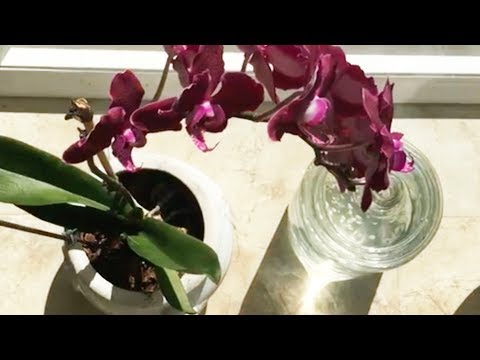 Garlic-based nutrient for orchids: making then bloom beautifully