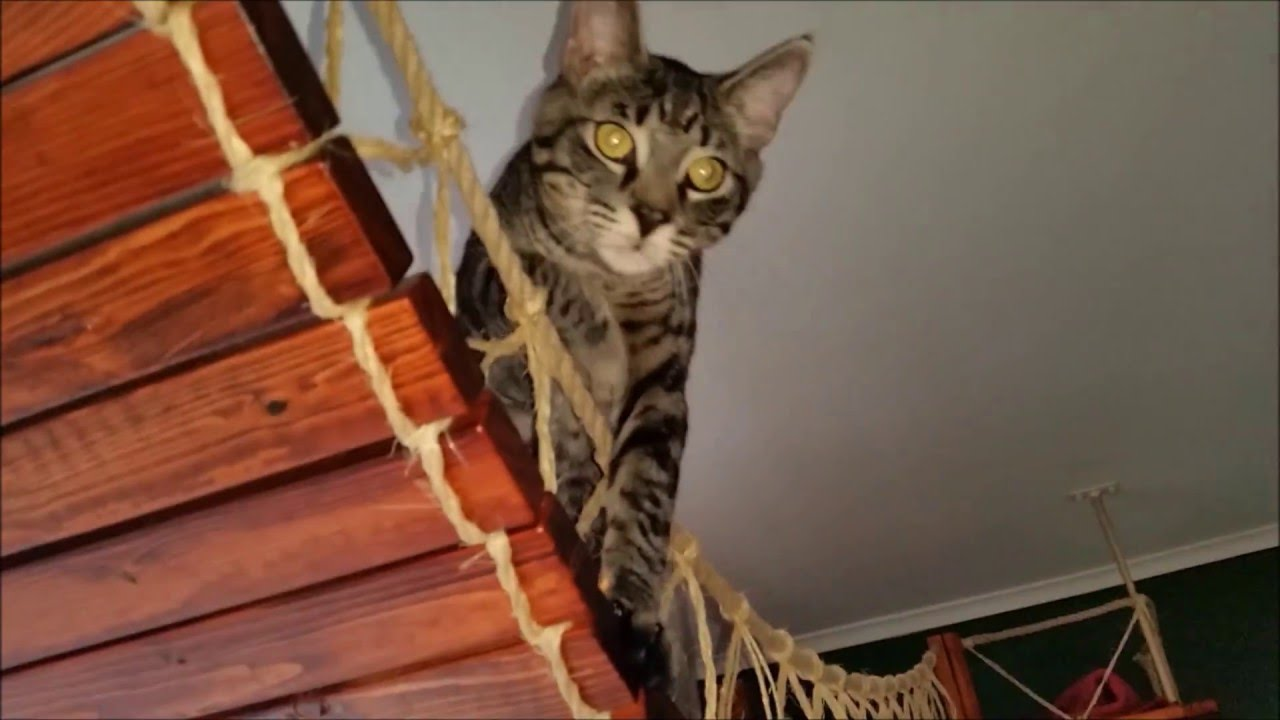 How to build a hang bridge for cats youtube for How to build a cat
