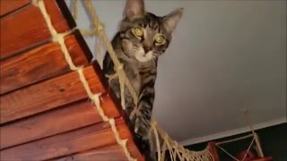 cat, cats, hang bridge, suspension bridge, woodwork.