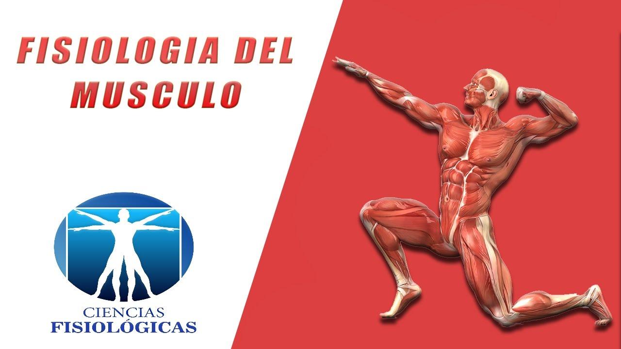 Fisiología del Musculo - YouTube