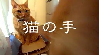 「猫の手貸しましょうか」ネコ兄弟(ボクチビ)は、ママが分別ゴミをま...