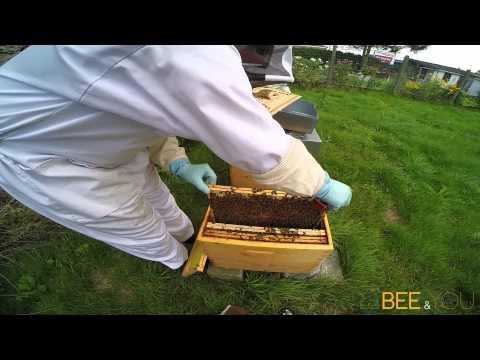 Visite d'une ruchette Bee&You au rucher Au Bio Village
