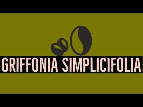 Achat Griffonia Simplicifolia - Traitement naturel de la déprime - Alternative Santé