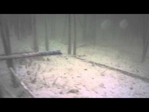 Lepomis gibbosus / sunfish