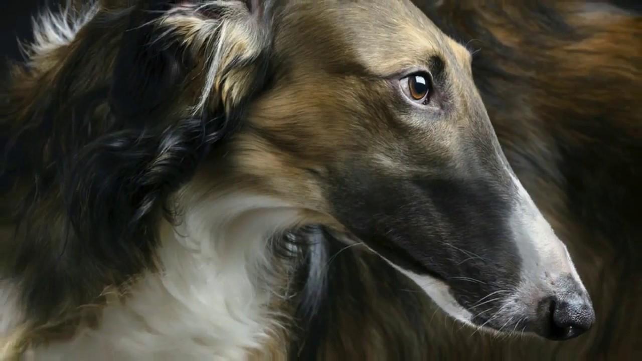 Охотничьи породы собак. Породы собак для охоты.