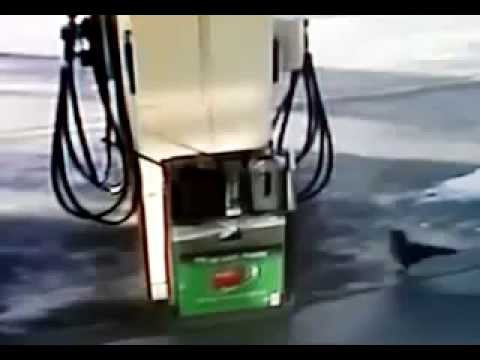 Crow pulls bag of meth from Australian gas station