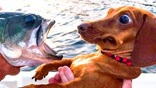 Oh No! Dogs Moments - Funny Dog And Cat Video - Life Funny Pets Video 2020