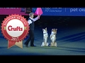 Mary Ray's Heelwork To Music Routine at Crufts 2017