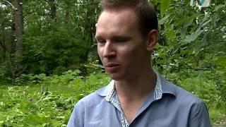 В Павловске, в долине реки Поповки, началась война с борщевиком