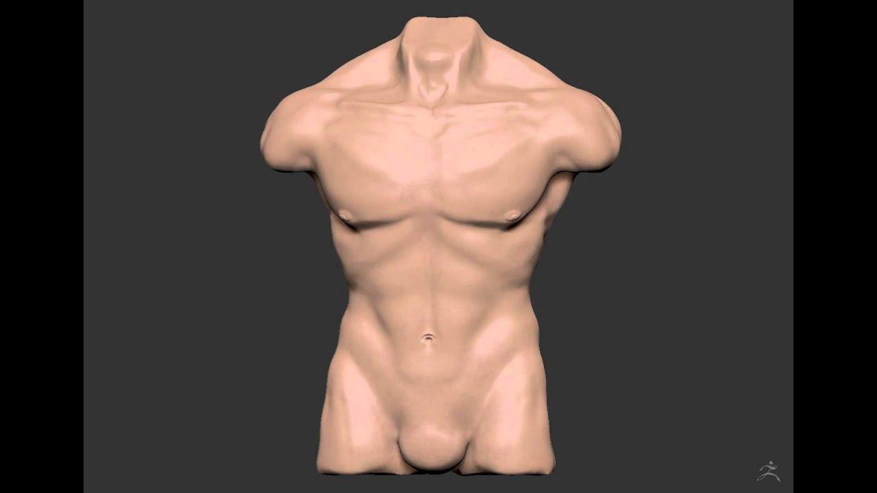 Estudo inicial de Anatomia 01 - Torso Masculino. - YouTube
