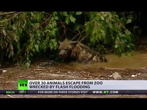 Wild animals still on the run in Georgia, cleanup op underway after floods