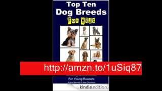 Golden Retriever's Facts – Top Ten Dog Breeds For Kids – Amazing Animal Books For Young Readers