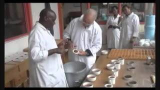 The Production of Tea Leaves