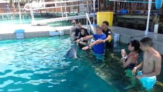Dolphin Encounters - Nassau, Bahamas