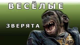 Животные смеются и улыбаются. Веселые зверята.