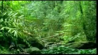 Lagu Sumatera Selatan - CANG KENUING KELADI RANTAI - Voc. Serunting Jaya - Cipt. Serunting Jaya.avi