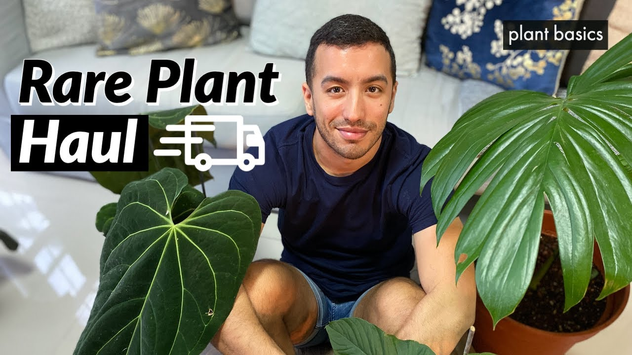 Massive Rare Houseplant Unboxing | June 2020