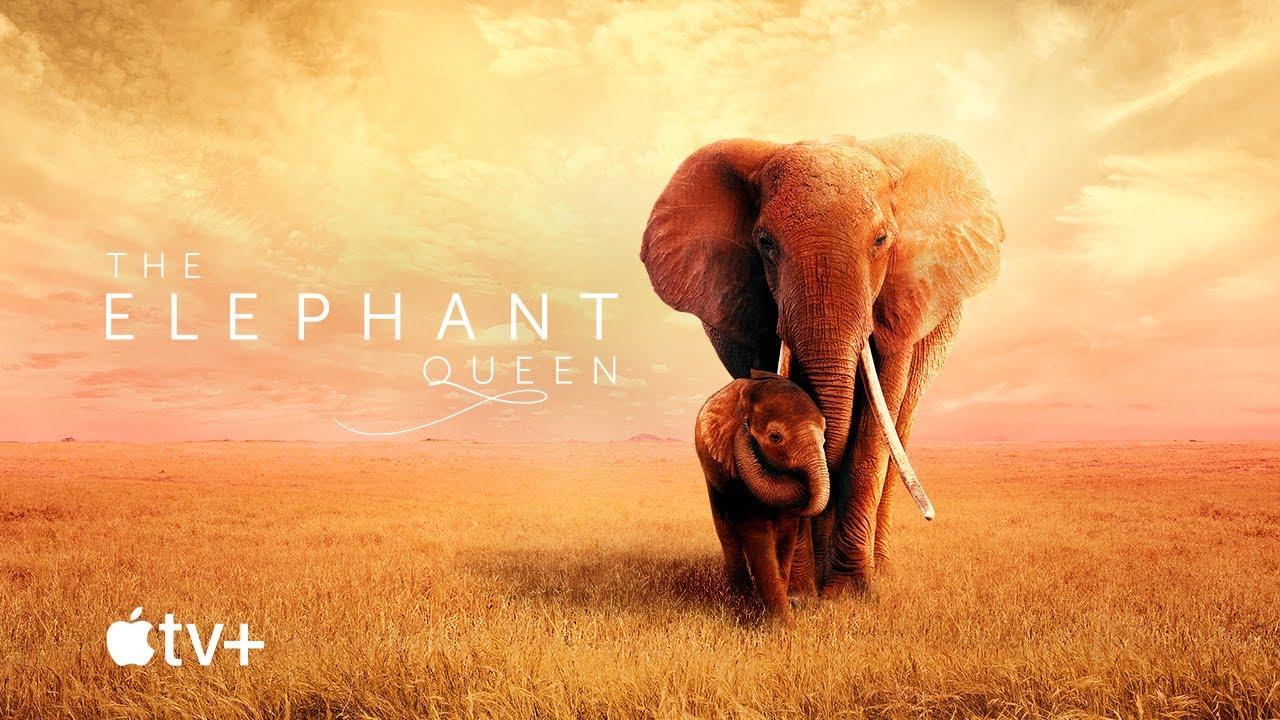 """Résultat de recherche d'images pour """"THE ELEPHANT QUEEN apple tv COVER"""""""