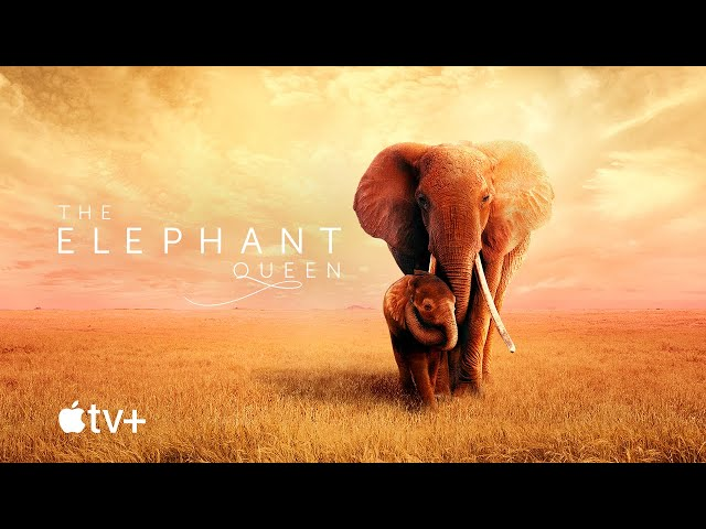 The Elephant Queen - Official Movie Trailer | Apple TV+