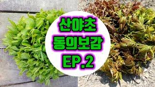 [독고마리 TV]산야초 동의보감 오가피순 두릅