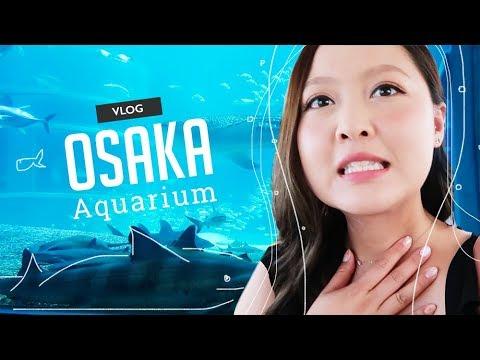 OSAKA VLOG   Whale Sharks at the Osaka Aquarium!