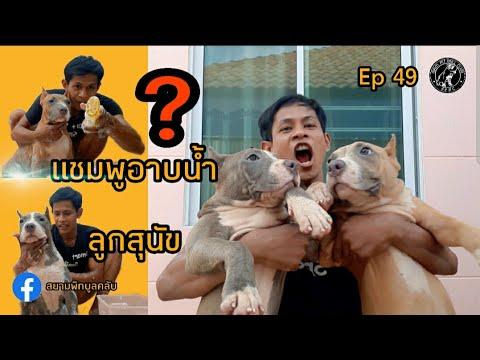 แชมพูอาบน้ำลูกสุนัข  สยามพิทบูลคลับ  siampitbullclub
