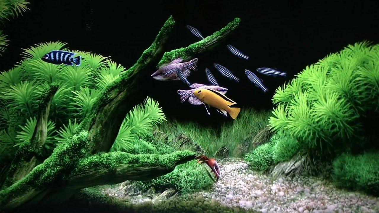 Animated Aquarium Wallpaper For Windows 7 Free Seawater Aquarium Hd 1440x1080 Auch F 252 R Playstation3