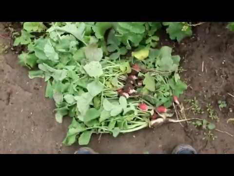 Зеленое Удобрение - на радость им ...