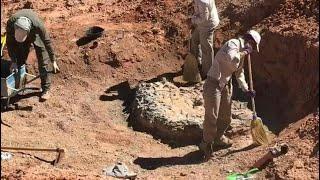 اكتشاف مقبرة ديناصورات تعود إلى 220 مليون سنة في الأرجنتين