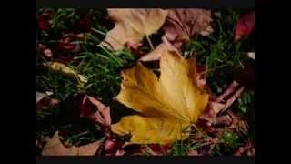 "Video Vivaldi ""The Four Seasons / Autumn"" Movement 1 download MP3, 3GP, MP4, WEBM, AVI, FLV Maret 2018"