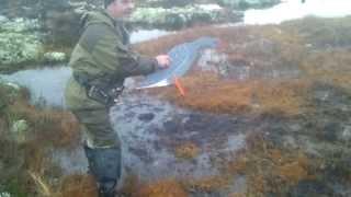 охота на гуся в карелии(ставим профиля на гусей ссылка на видео-http://youtu.be/e8aanpFaI-g., 2014-02-13T17:44:56.000Z)