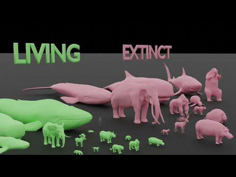 Largest Living vs