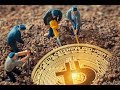MINERIA CRIPTOMONEDAS - Estoy preocupado por la minería de Bitcoin, ¿debo estarlo?