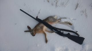 Добор подранка. Заяц.hunting on a hares in Russia