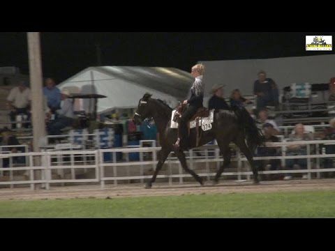 Missouri Fox Trotter Open Amateur 5 years & Older Mares WC AVA 2014