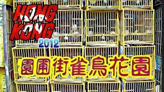 HONG KONG TRIP 2012 - Yuen Po street bird garden
