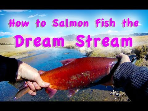 How To Salmon Fish The Dream Stream Sockeye Salmon Kokanee Fly Fishing