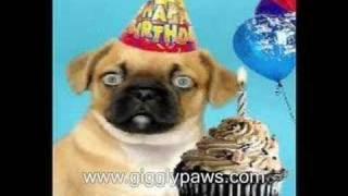 Pug Sings Happy Birthday - Hilariously Funny Dog Video Ecard