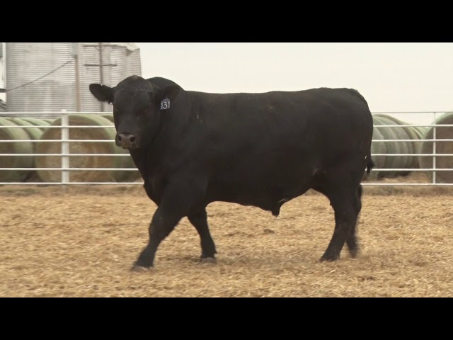 Express Ranches Lot 131