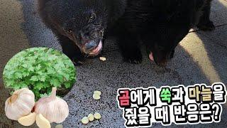 곰에게 쑥과 마늘을 줬을때 곰들의 반응은?? 식탐에 지…