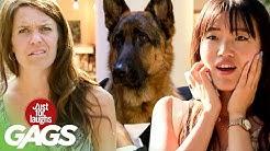 Best of Animal Pranks Vol. 3  | Just For Laughs Compilation