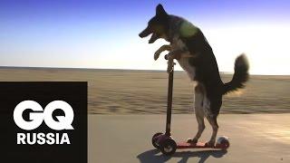 Бой с весом: собака делает жим от груди на пляже